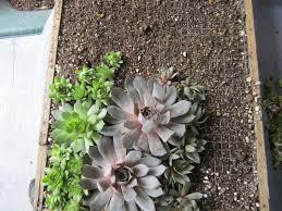 living succulents wall garden inside house on pinterest living