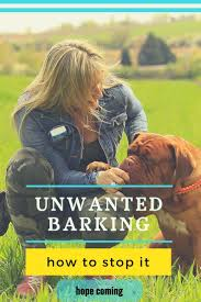 how to get dog to stop barking best 25 teach dog to come ideas on pinterest dog training tips