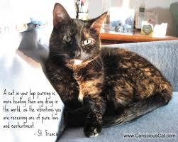 The Healing Barn The Healing Power Of Cats