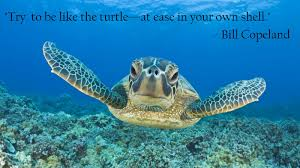 The Quot Be Like Bill - try to be like the turtle bill copeland 1600x900 imgur