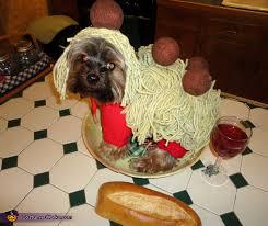 Meatball Halloween Costume Spaghetti Meatballs Dog Costume Funny Homemade Costumes