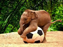 cute baby elephant playing