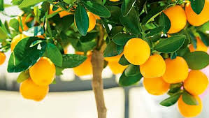 a gardener s guide to fruit trees what you can grow in small