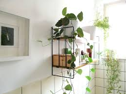 Bamboo Ideas For Decorating by Decorations Small Artificial Plants For Home Decor Bamboo Plants