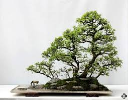 of china tree top 10 penjing trees bonsai empire