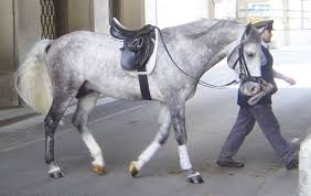 Types Of Grey Color by Gray Horse Wikipedia