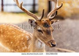 deer family stock images royalty free images vectors