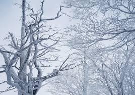 free photo wood mountain winter tree snow flower snow max pixel