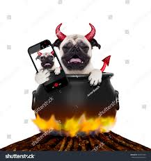 halloween background devil pug halloween devil dog burning inside stock photo 320472209