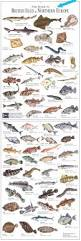 fish species identification images reverse search