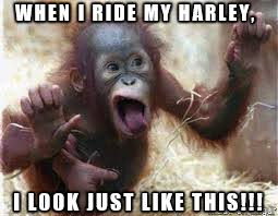 Funny Monkey Meme - monkey with harley blood meme on imgur