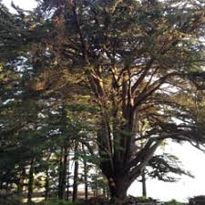 spiral tree llc 19 reviews tree services 11557 se 32nd ave