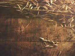 of harvest religious background worship backgrounds