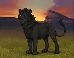 lion eye colour lion 2017