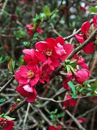 Flowering Shrubs That Like Full Sun - 14 flowering shrubs for sun hgtv
