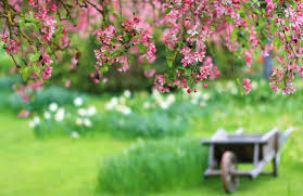 spring hd wallpapers backgrounds