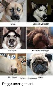 resume templates janitorial supervisor meme dog funny memes clean 25 best memes about contract management contract management memes