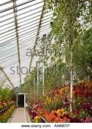 botanic gardens belfast northern ireland stock photo royalty