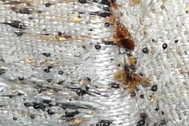 how can you get rid of bed bugs how to get rid of bed bugs