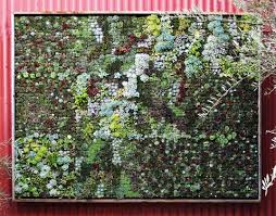 ivy garden design native garden design