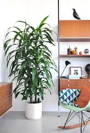 130 best plantes d u0027intérieur houseplants images on pinterest