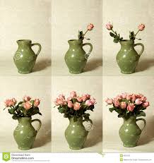 arranging flowers sequence stock photos image 6837203