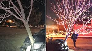 driving with 15 foot tree stuck to car gets arrested for dui