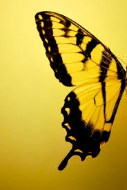 yellow butterfly wings color yellow