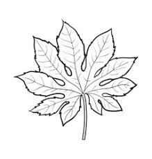 full leaf of monstera palm tree sketch royalty free vector