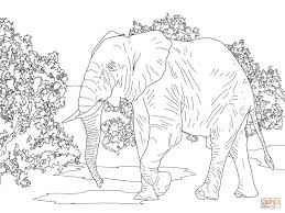 coloring pages animals african forest elephant walking coloring