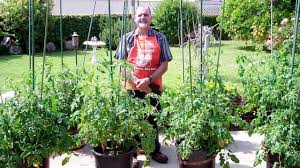 Bonnie Plants Patio Tomato Fertilizers Don U0027t They All Do The Same Thing Lets Grow Some