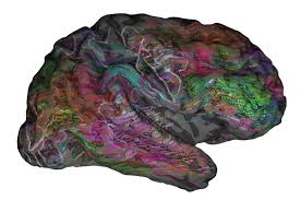 Brain Mapping Map Of The Brain U0027s Word Filing System Could Help Us Read Minds