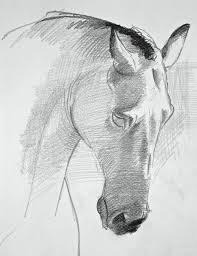 drawing horses draw a horse u0027s face in 3 steps basic drawing