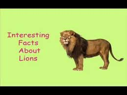 interesting facts about lions for