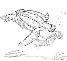 leatherback turtle hunting jellyfish coloring page free