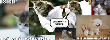 Funny Kitten Meme - funny kitten memes home facebook