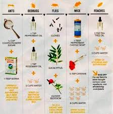 natural bed bug remedies chart to get rid of ants bedbugs flies mice and roaches
