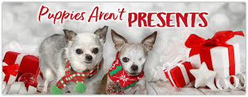 puppies aren t presents harley s