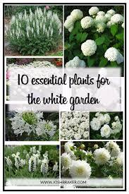 10 easy care plants for top 10 essential plants for the white garden josh braker