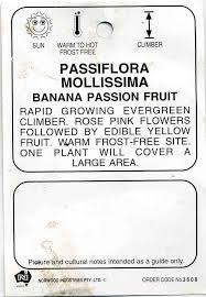 passiflora mollissima banana passionfruit buy banana passionfruit