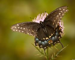 butterfly picture by dem90 for national geographic photography