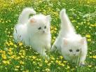 جحا والقطه الخبيثه Images?q=tbn:ANd9GcS9FIjdyxx0vR1_akeR3wTRC6JnoVprvCGJDeDrDzYgsEQql2X2Ipj3y8A