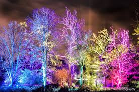 tree lights at the morton arboretum tree tastic hitzeman photography