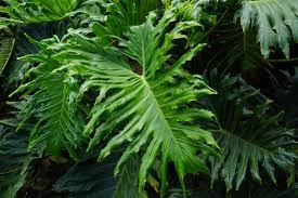 free images leaf flower green jungle tropical botany