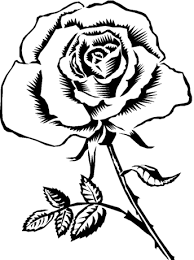 rose color roses coloring pages free coloring pages print