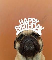 Happy Birthday Pug Meme - categorised birthday messages for quick easy selection