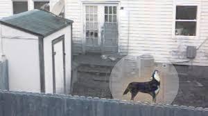 justin long voices charlie a neglected u0027backyard dog u0027 youtube