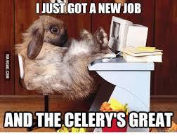New Job Meme - 25 best memes about celery meme celery memes