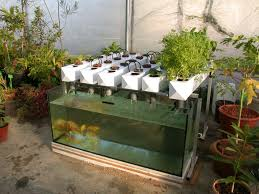backyard aquaponics system backyard landscaping photo gallery