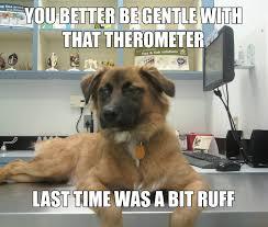 Dog At Vet Meme - unamused dog at the vet funny